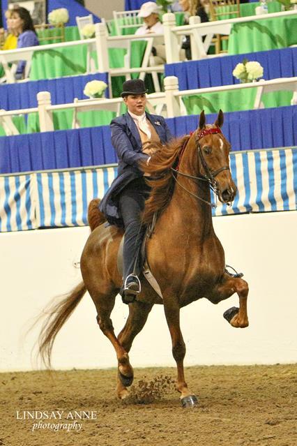American Saddlebred at Pin Oak