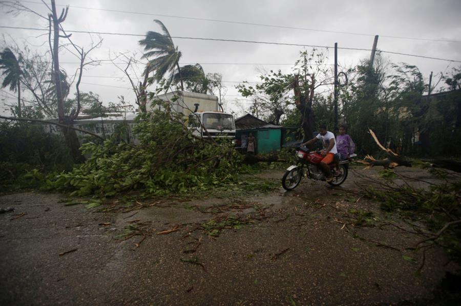 Fallen trees are seen after Hurricane Matthew passed through Les Cayes, Haiti.