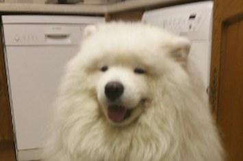 Floofy dog.
